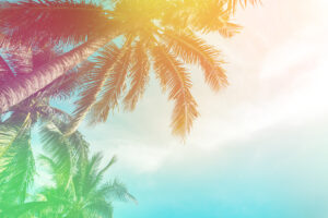 tropical-palm-tree-with-colorful-bokeh-sun-light-on-sunset-sky-cloud-abstract-background-summer-vacation-and-nature-travel-adventure-concept-vintage-tone-filter-effect-color-style